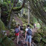 image forêt