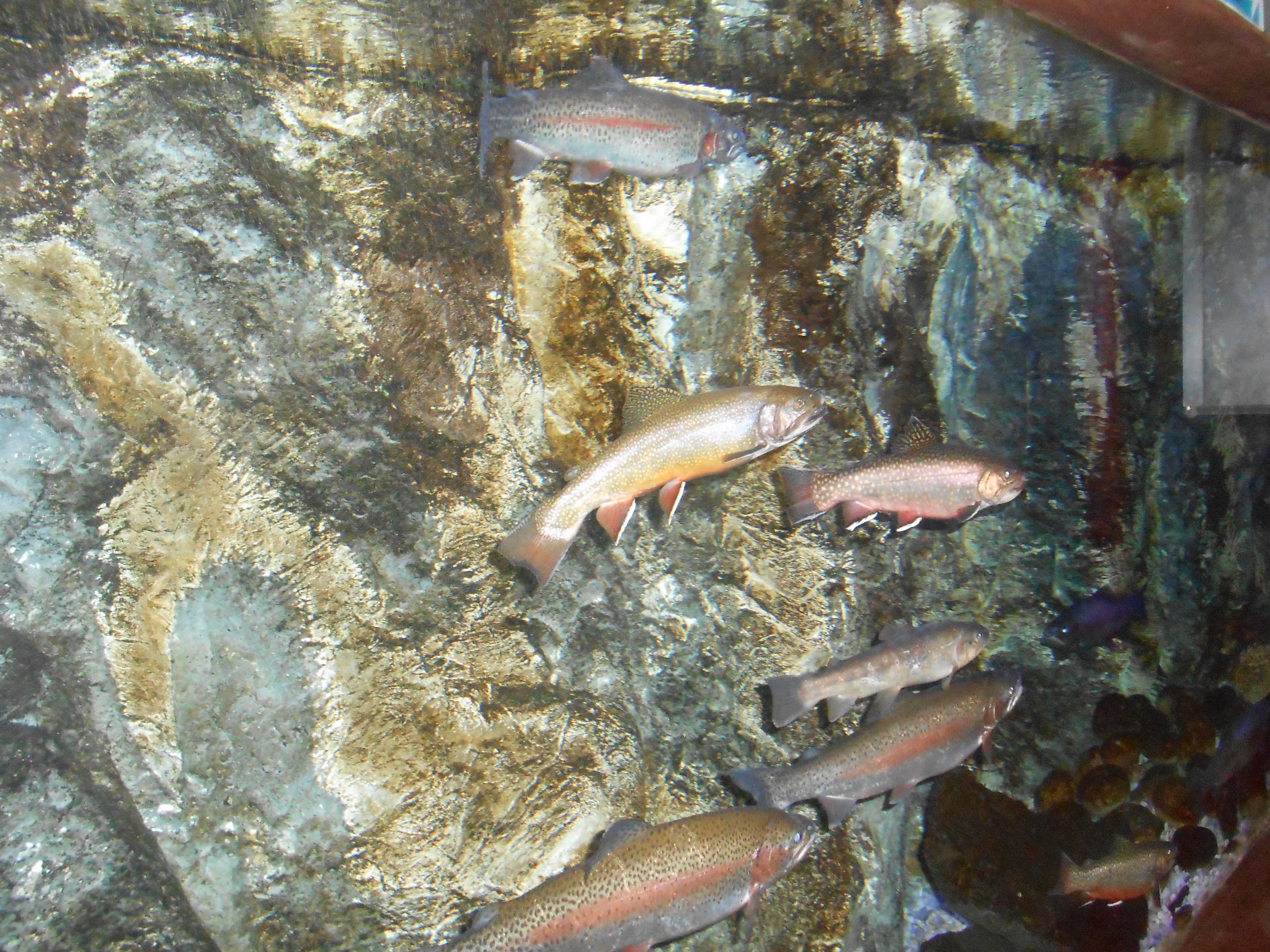 A la decouverte du domaine de vendresse ecole primaire for Nourrir des poissons rouges