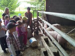 Les cochons ont faim !