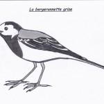 Bergeronnette Léna
