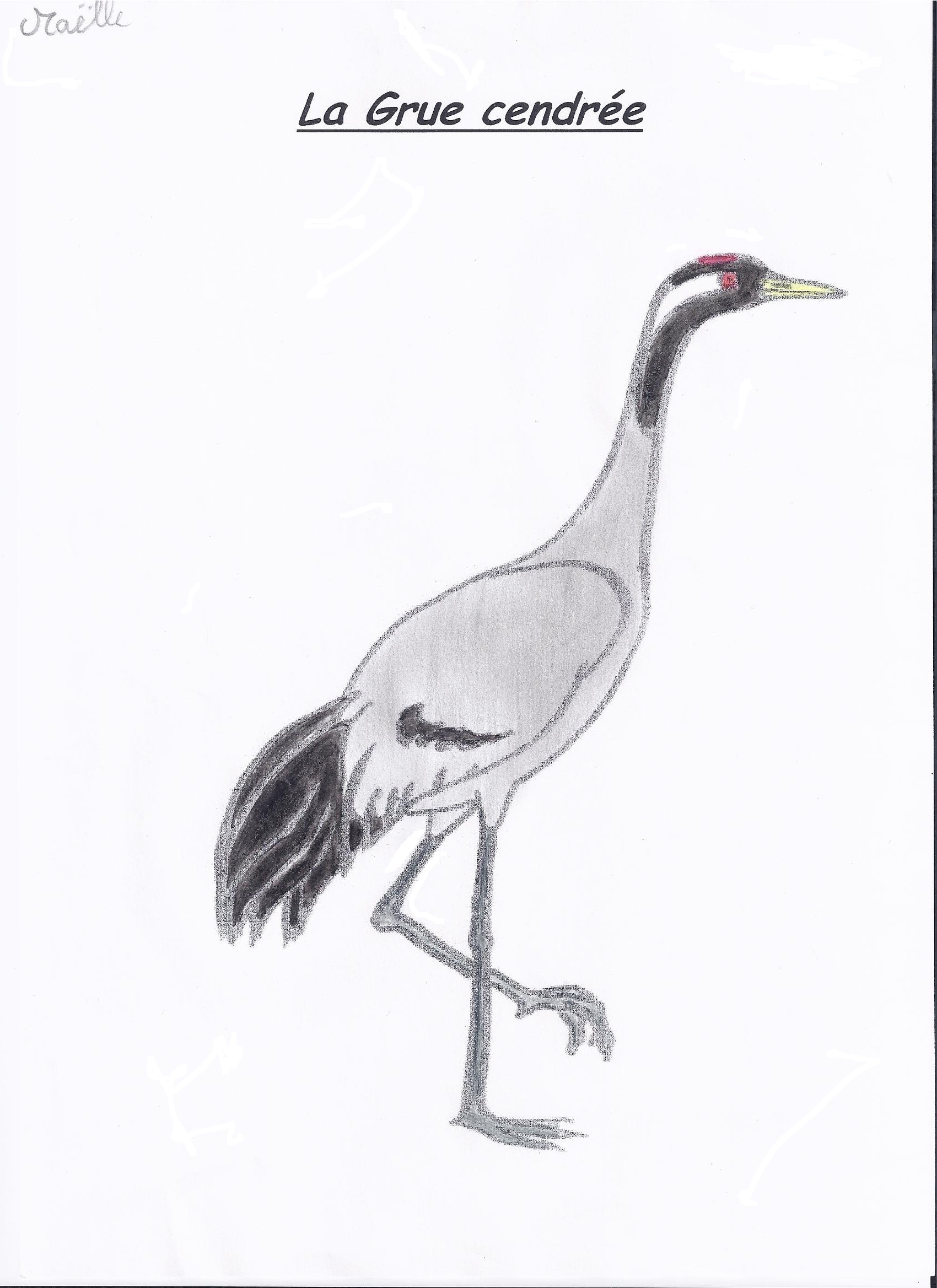 Le coin des ornithologues ecole primaire publique magneux - Dessin de grue ...