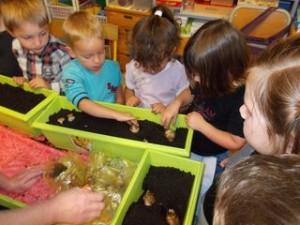 On plante les jacinthes