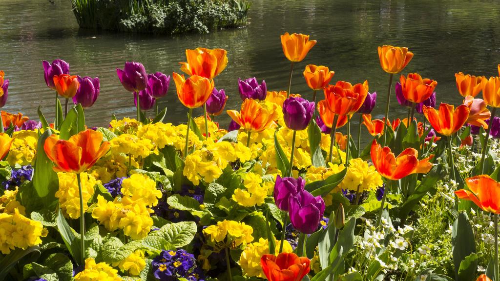 fleurs colorees